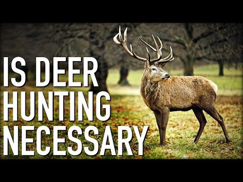 Is Deer Hunting Necessary for Population Control?