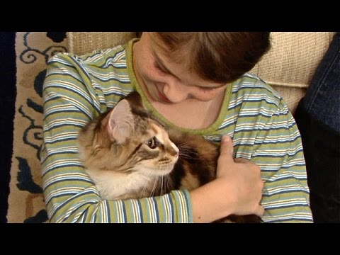The Best Cats For Kids And Pet Responsibility