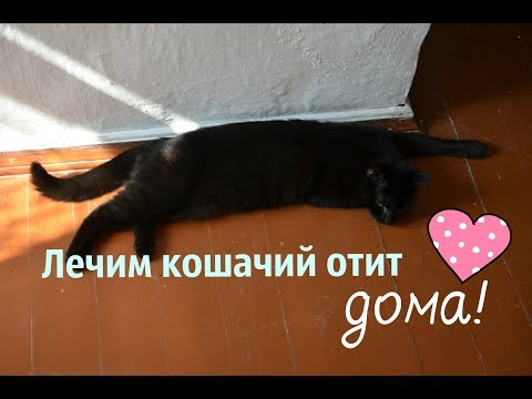 Отит у кота лечение в домашних условиях