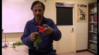 Herbarium Techniques Part 8 (flower dissection)