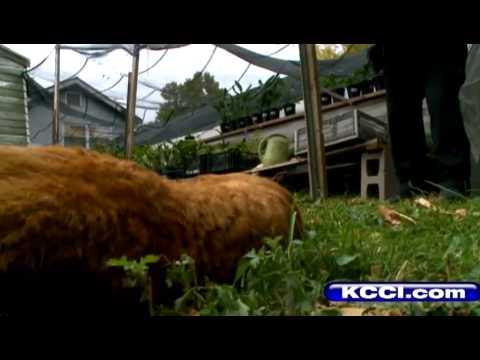 Mountain lion shot in Iowa back yard