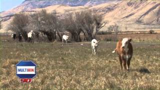 Mike Davis, Kueny Ranch, South East, Oregon explains how he uses Multimin 90