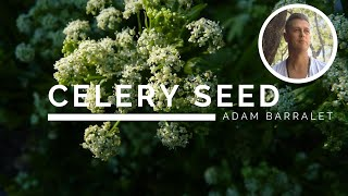 Celery Seed - The Oil of Non-Comparison