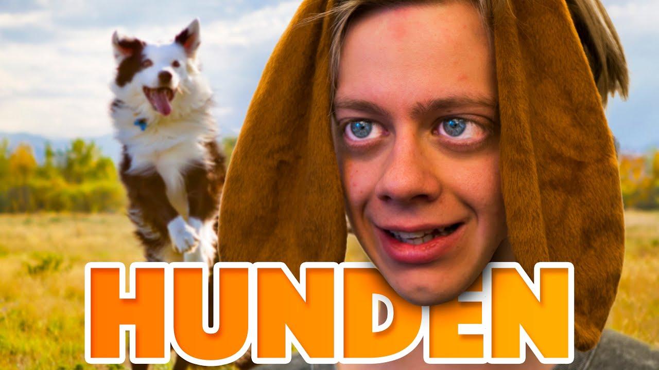 videos hund