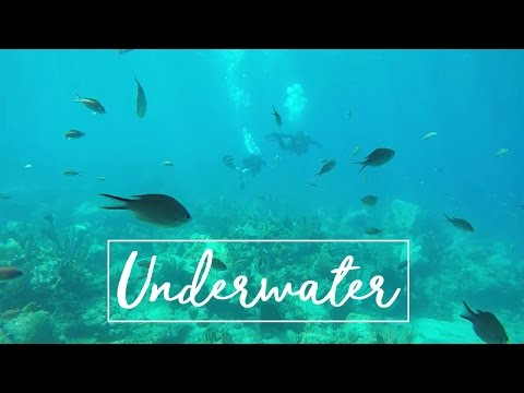 20 Feet Underwater | Guadeloupe
