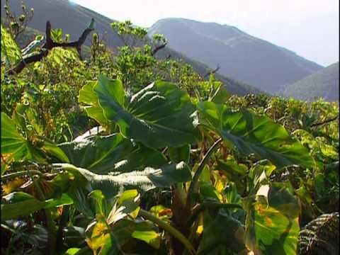 Guadeloupe : 3 randonnées - Vidéo COMPLETE