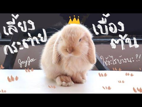 EP.1 เลี้ยงกระต่ายเบื้องต้น ใช้อะไรบ้าง? รีวิวกระต่าย Holland Lop BunnyTTCoupe   Joyjee Loveberry