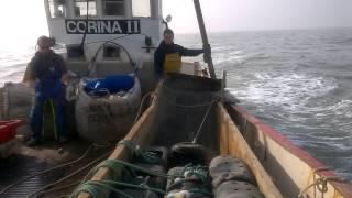 Whelk fishing