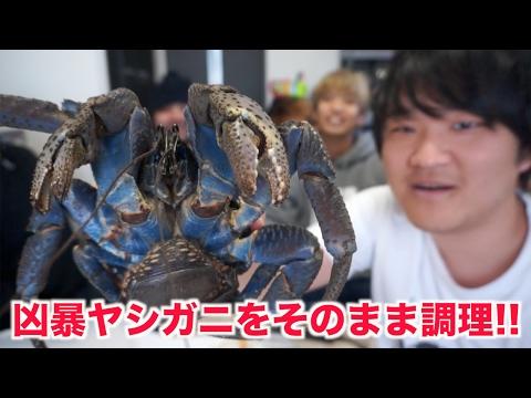 天然記念物!!凶暴ヤシガニを味噌汁にして食べよう!!