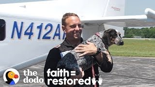 These Rescue Dogs Are About To Be Adopted By Veterans | The Dodo Faith = Restored
