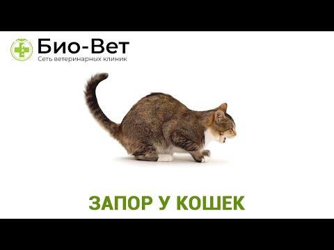 Запор у кошек. Ветеринарная клиника Био-Вет.
