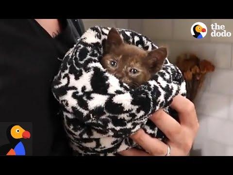 Hurricane Irma Kitten Rescue | The Dodo