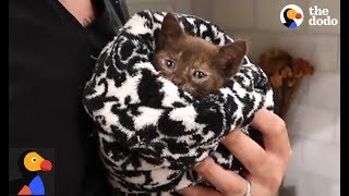 Hurricane Irma Kitten Rescue | The Dodo