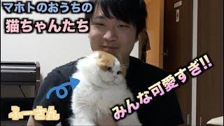マホトのおうちの猫ちゃんたちが可愛すぎてヤベェ!!!!!