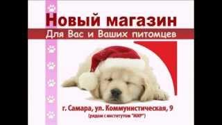 ЗооМаркет | Зоомагазин в Самаре(, 2012-01-29T19:49:26.000Z)