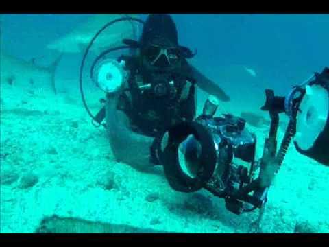 St Maarten Shark Dive Ocean Explorers.wmv