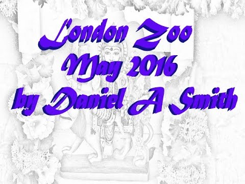 London Zoo may 2016 by D A Smith