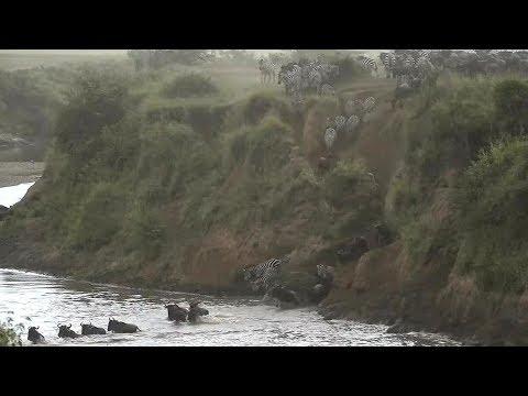 SafariLive- The Big Migration started!