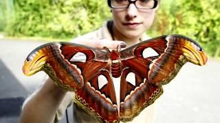Интересные факты - Бабочки