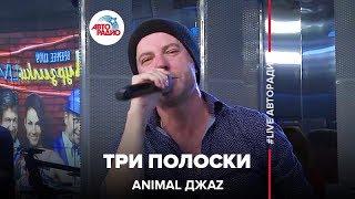 Animal ДжаZ Три Полоски LIVE Авторадио