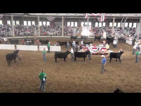 Iowa State Fair - Champion Simmental Heifer Drive Sponsored by Ford Farms on MLC TV