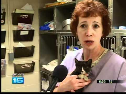Kitten found tortured with fireworks in Fort Wayne