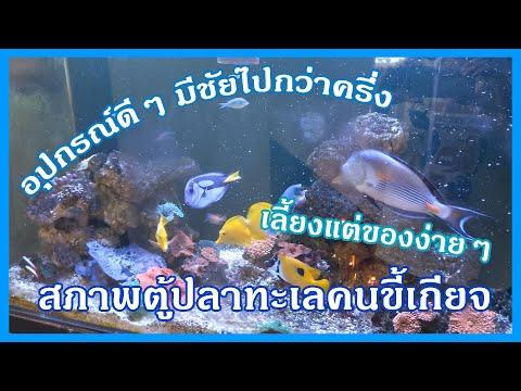 ตู้ปลาทะเลแบบฉบับคนขี้เกียจ เลี้ยงของง่ายๆ ใช้อุปกรณ์ดีๆไฮโซๆ 555