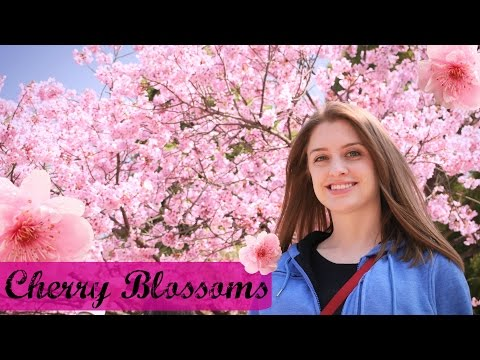 CHERRY BLOSSOMS & STREET FOOD | Tokyo, Japan