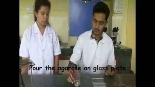 Immunoelectrophoresis (Teaching kit)