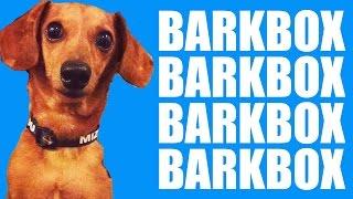 Wiener Dog V. A Bearded Lady - Portillo's Barkbox Unboxing