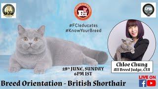 Webinar #12: Breed Orientation British Shorthair