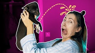 КОРОЧЕ ГОВОРЯ, ОТЖИМАЮ ТЕРРИТОРИЮ | Дерзкий щенок
