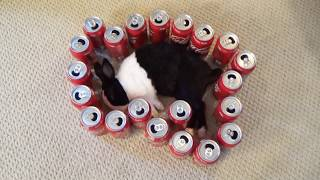 Waking a sleeping rabbit by surrounding him with Coke cans