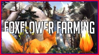 Best Foxflower Farming Tricks and Routes