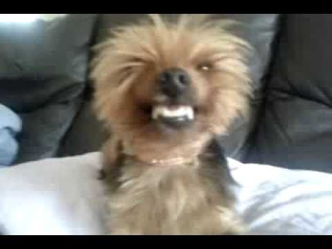 Smiling dog | Dogs Can Smile