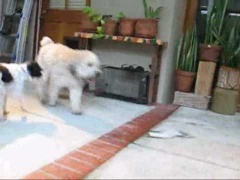 The joy of fostering a dog (by Eldad and Audrey Hagar)