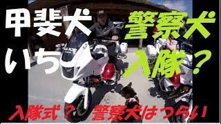 和歌山県の道の駅くしがきの里で和歌山県警さんの交通安全イベントがあ...