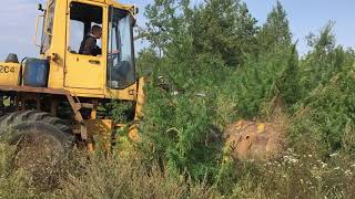908 кг дикорастущей конопли уничтожено в Бобруйском и Кличевском районах