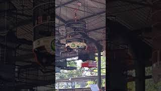Video kacer wiro sableng milik Mr.didin lapendos madiun download MP3, 3GP, MP4, WEBM, AVI, FLV Juli 2018