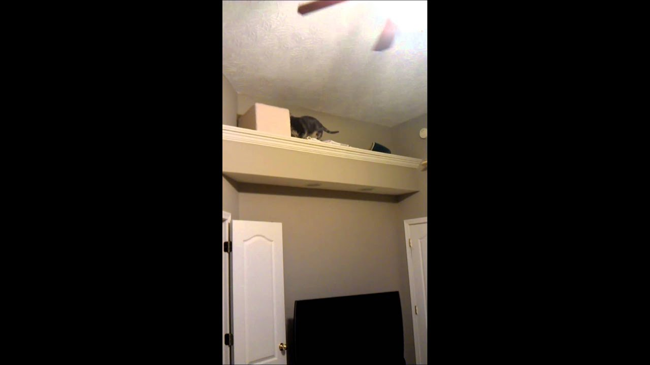 My Cat Climbing Wall Stairs  Shelves  YouTube