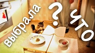 Какую еду выбрала кошка (ч.1) Сенсация, однако!