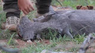 Jagd in Namibia