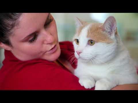 "Ottawa Humane Society dealing with ""kitty crisis"""