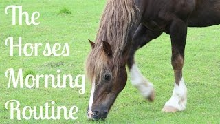 The Horses Morning Routine | Winter