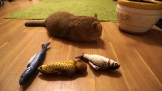 Fish, fish, fish, more fish