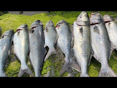 Bluefish Fishing In Long Island NY Using Diamond Jig