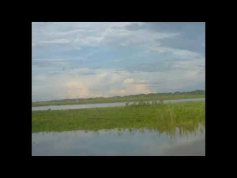 Ucayali River floodplain
