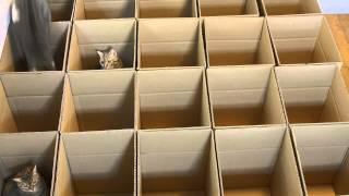 Кошки против коробок :)