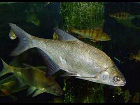 Milieu rivière nature