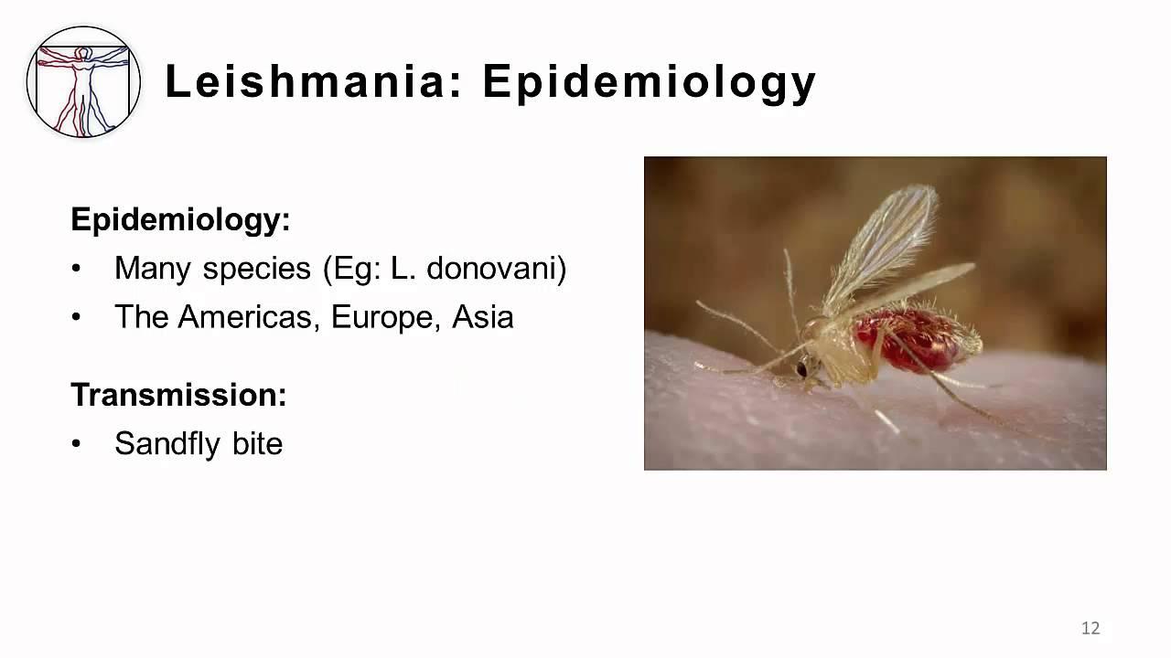 protozoan emberi parazitak kezelese